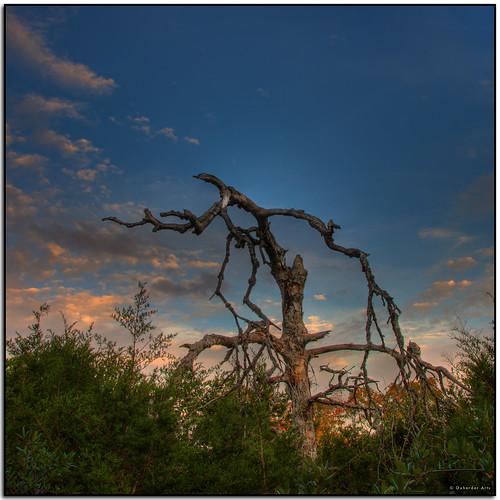 tree austin dead oak texas hdr photomatix 3exp deadoaktree top20texas