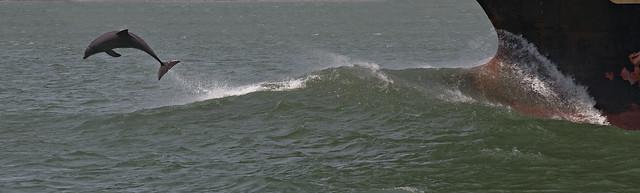 Dolphin Half Flip