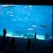 IMG_3342Atlanta Aquarium (The OMG Window)