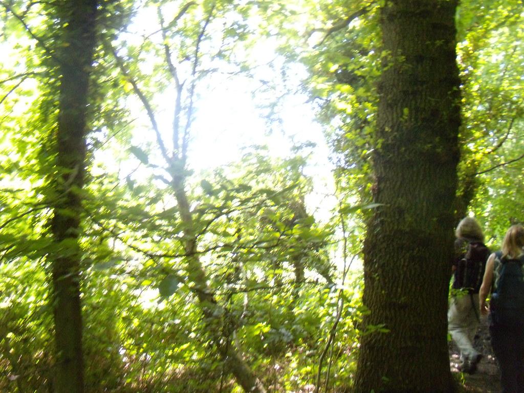 Sun through trees 2 Haslemere round walk