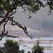Panna National Park image
