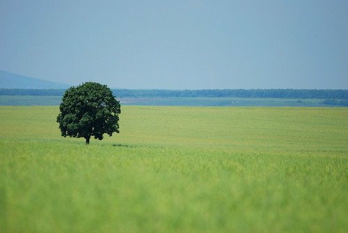 tree field landscape fa táj magyarország mező repce
