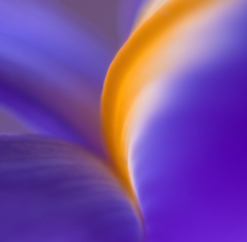 iris abstraction