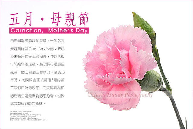 3_D303632-Carnation, Botany, Flower, Mother's Day, Pink, Taiwan 康乃馨-花卉-母親節-粉紅-石竹-母親花-花朵