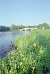 flowers_river_bridge_wide_RAW by mkromer