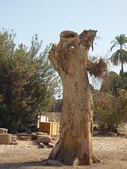 Karnak - tree