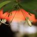 Kemuning - HBW!!! by bngishak On & Off