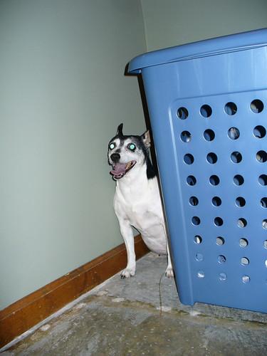 2009-07-04 - Dogs No Like BOOM! - 0002