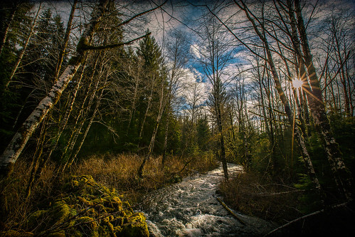 trees sun texture clouds creek kingcounty granitecreek jerryjones middleforksnoqualmieriver middleforkvalley