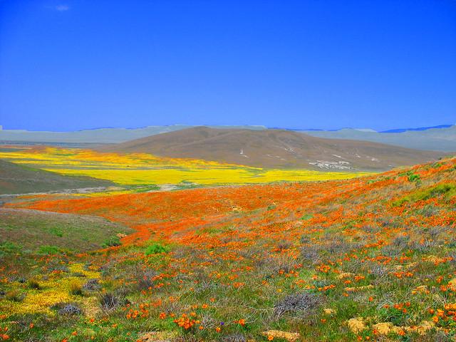 Antelope Valley, El valle de las Amapolas silvestres, desierto de Mojave, California, Estados Unidos