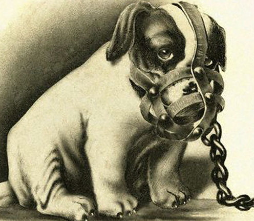 dog_muzzle_growl