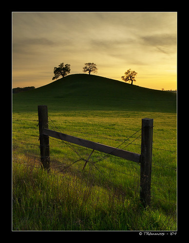 california lighting sunset sky tree green grass sunshine clouds fence landscape gold three wire oak glow olympus explore pa barbedwire 24 e3 sacramentocounty threetrees 1000views californialandscape zd 1260mm olympuse3