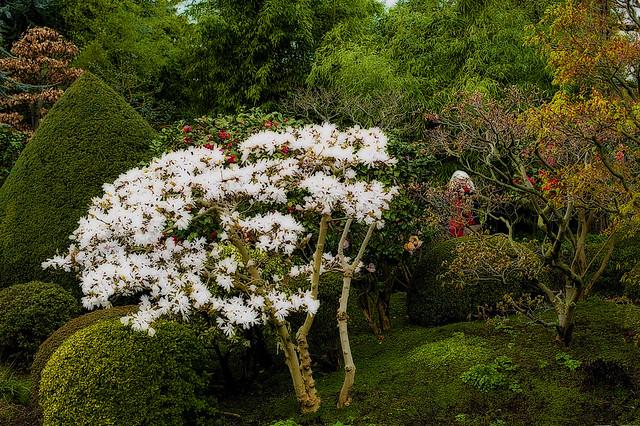 Le jardin albert kahn and marie annick filming in the back for Le jardin kahn