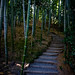 Secret Path - Kyoto