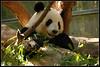 Natalia Robba Photography = panda2