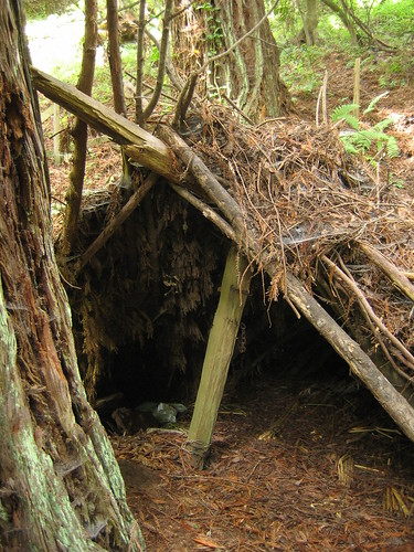 inside the lean-to shelter