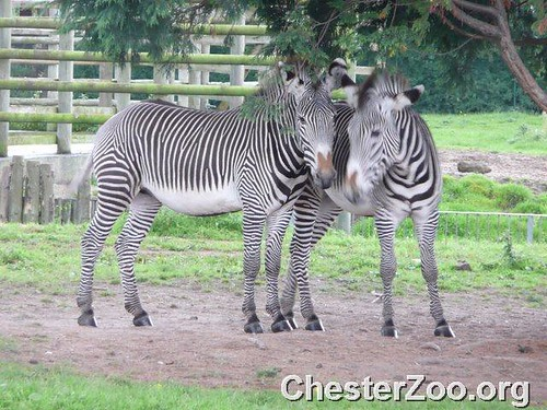 chester zoo applied science coursework A group of 30 lower 6th biology and psychology students visited chester zoo last week applied science (forensic science) level 3 btec – business.