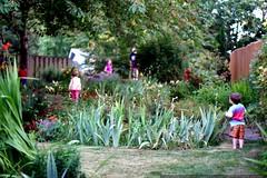lots of kids in lori & scott's backyard    MG 7210