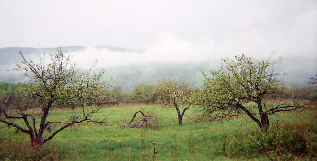 Burnham Hollow Orchard, Middletown Springs