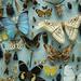 Oxford Entomology by Arddu
