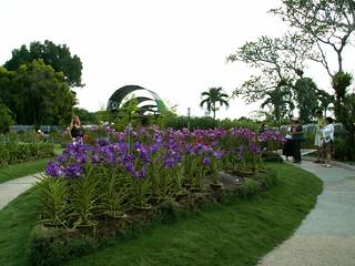 Εικόνα από KL Orchid Garden. malaysia kualalumpur orchidgarden lakegardens