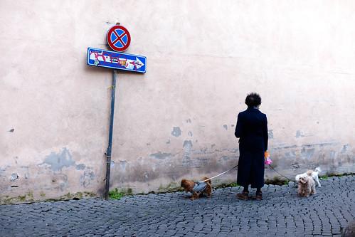 Hunde in Rom; copyright 2014: Georg Berg