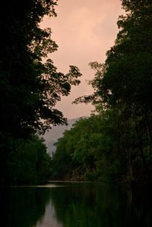 Pink Sky at Caroni Swamp
