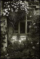 Nunnington Window
