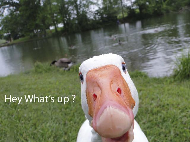 Hey WhatsUp