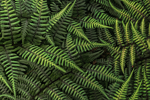 fern texture photography