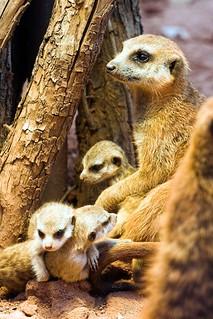 - Zoo Erfurt -