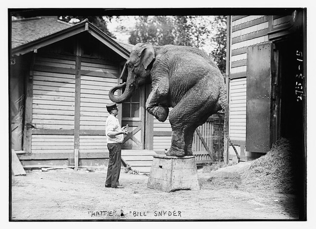 """Hattie"" the elephant and Bill Snyder  (LOC)"
