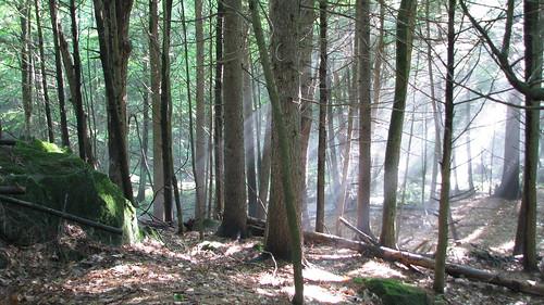 morning trees light sunlight woods maine