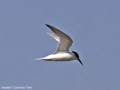 albatross(0.0), gannet(0.0), gull(0.0), animal(1.0), suliformes(1.0), wing(1.0), fauna(1.0), beak(1.0), bird(1.0), flight(1.0), seabird(1.0),