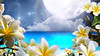 Relaxing wallpaper - frangipanis ocean moon