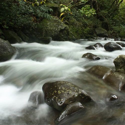 A stream flowing in the Iao Valley State Park.