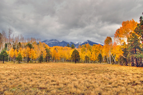 autumn arizona d50 nikon san francisco raw single hart prairie peaks sanfranciscopeaks aspen hdr hartprairie photomatix singleraw nonaviationthursdays nonaviation