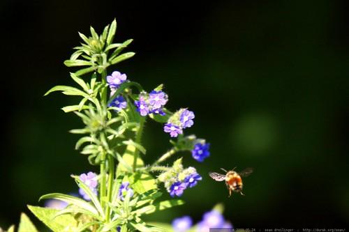 survivor, pollinator    MG 4357
