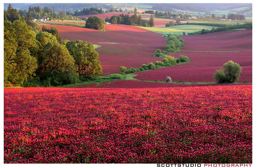 IMAGE: http://farm4.staticflickr.com/3641/3577631070_b23af5db4f_o.jpg