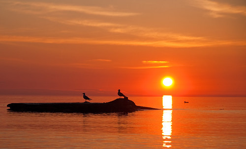 morning sunset red orange cloud sun lake reflection bird art nature water silhouette yellow wisconsin sunrise wow point dawn coast early wind dusk seagull peaceful tranquility lakemichigan serenity serene wi tranquil cloudscape racine windpoint diamondclassphotographer sailsevenseas