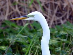 West Palm Beach County Birding