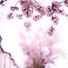 spring ting 2 by eastendimages