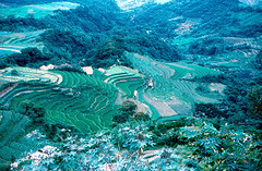Taiwan - Chinese Agriculture