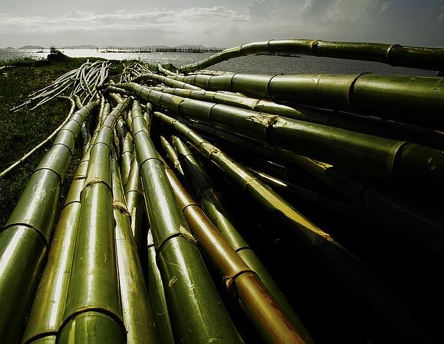 kawayan ( bamboos )