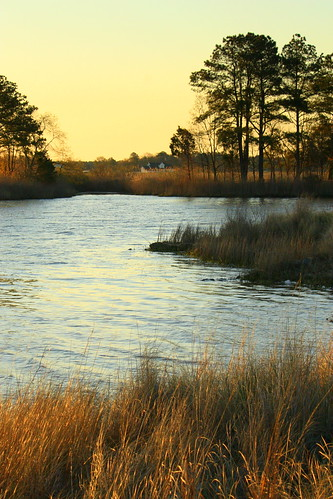 grass sunrise glow sawgrass treees churchcreek rudderow chesapeakemaryland
