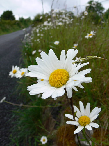 Wild flowers don't care where they grow – Magnumlady Blog