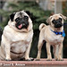 Portrait of Pugs in the Park: Otto and Clancy by Rock and Racehorses