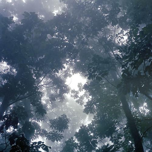 trees usa color 6x6 tlr film leaves misty fog mediumformat virginia nationalpark unitedstates surreal 124g shenandoah ghostly yashica twinlensreflex yashicamat124g shenandoahnationalpark colorfilm yashicamat124 yashica124g