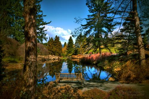 park lake festival forest reflections bench geotagged japanese empty romantic cheeryblossom vandusengarden janusz leszczynski 5946 geo:lon=123134758 intheheartofvancouver geo:lat=49238655