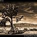 Joshua Tree NP (11)